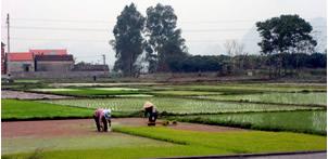ベトナム水田風景